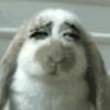 Slotherver头像