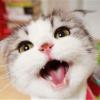 用代码养活猫头像